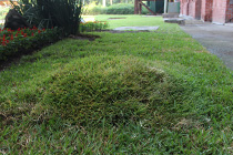 mala hierba miniatura